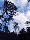 Sky and Trees in Binsar